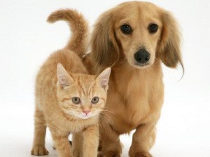 cani e gatti pagano le tasse
