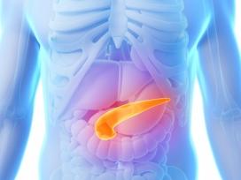 med-pancreas